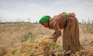 Cameroon: Almost 97% Of Household Have Problems In Food Crop Production